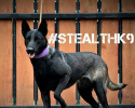 Texas Stealth K9 Kennel Club